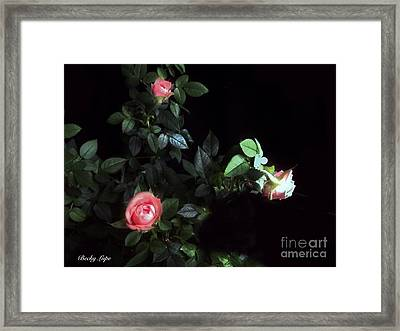 Romance Of The Roses Framed Print by Becky Lupe
