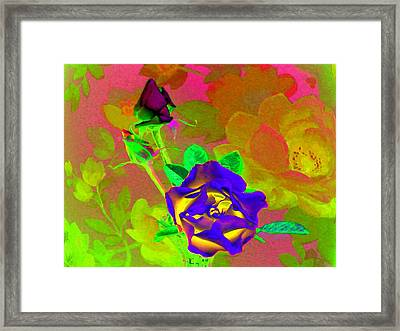 Romancing The Rose Framed Print by Will Borden
