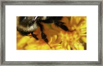 Romancing Yellow Framed Print by Linda Shafer