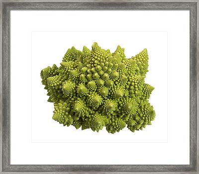 Romanesco Cauliflower (brassica Framed Print by Science Photo Library