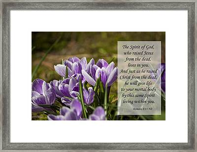 Romans 8 11 Framed Print by Inspirational  Designs