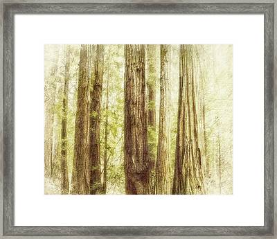 Romantic Forest Muir Woods National Monument California Framed Print