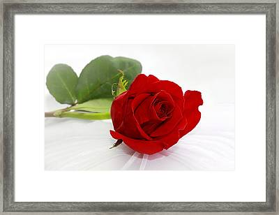 Romantic I Love You Red Rose Framed Print by Tracie Kaska