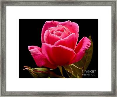Romantic Framed Print by Nick  Boren