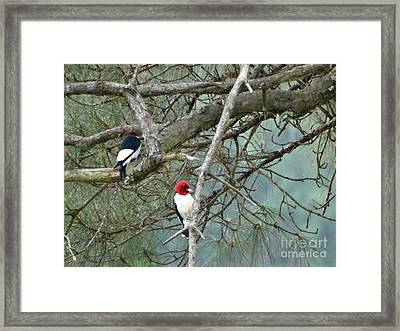 Romantic Woodpeckers Framed Print by Joseph Baril