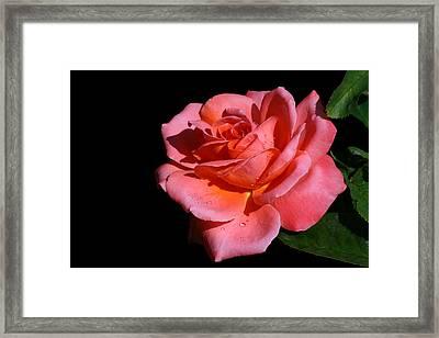Framed Print featuring the photograph Romantica by Doug Norkum
