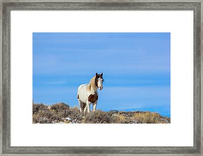 Romeo In Skyline Framed Print