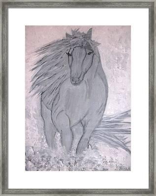Romeo The White Stallion Framed Print