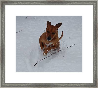 Romp In The Snow Framed Print by Mim White