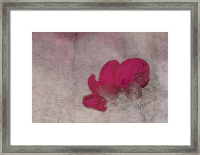 Rondo Floral - 22t02 Framed Print by Variance Collections