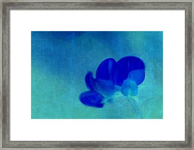 Rondo Floral  S211at03 Framed Print by Variance Collections