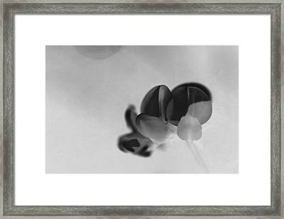 Rondo Floral - S30ct02 Framed Print by Variance Collections