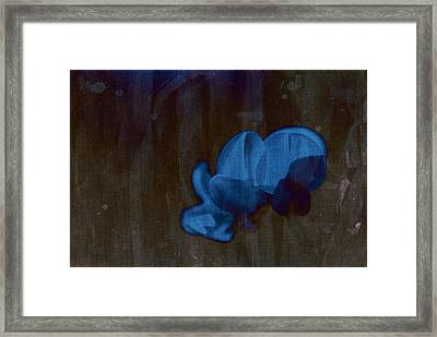 Rondo Floral - S43at04 Framed Print by Variance Collections