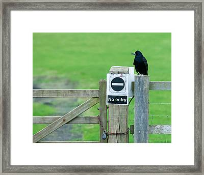 Rook On Guard Framed Print by Avian Resources