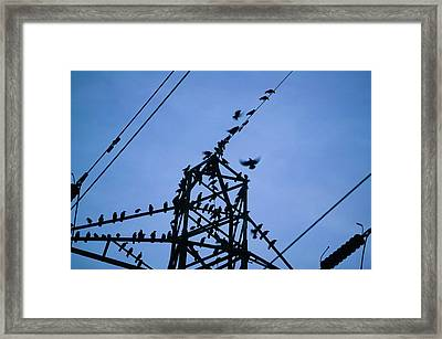 Rooks And Jackdaws At Sunset Framed Print by Ashley Cooper