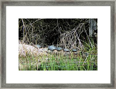 Room For One More Framed Print by Selma Glunn