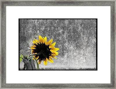 Room With A View Framed Print by Shawn Hempel
