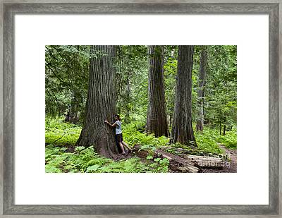 Roosevelt Grove Of Ancient Cedars, Idaho Framed Print