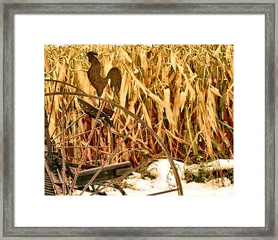 Rooster 1 Framed Print by Larry Campbell