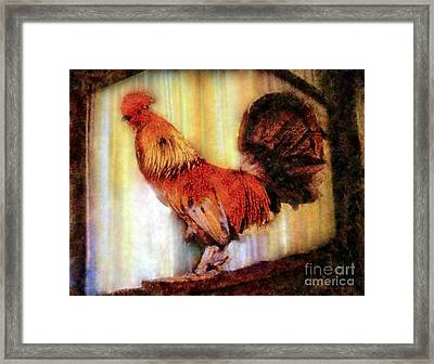 Rooster Early Morning Light Framed Print by Janine Riley