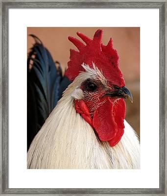 Rooster Face Framed Print