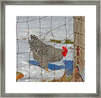 Rooster George Framed Print by Denise Romano