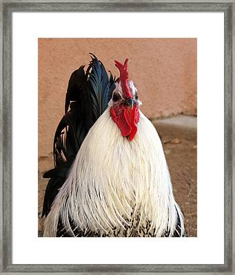Rooster Framed Print by Laurel Powell