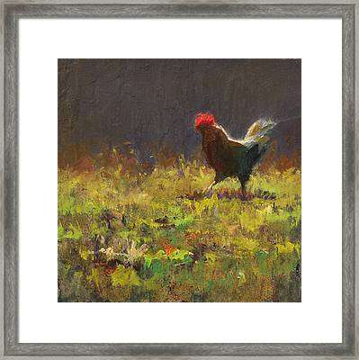 Rooster Strut Framed Print by Karen Whitworth