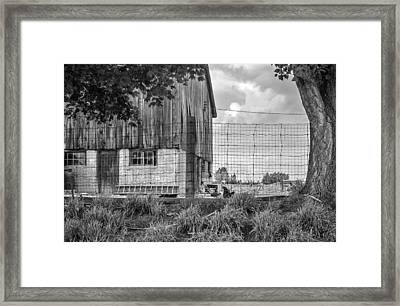 Rooster Turf Monochrome Framed Print