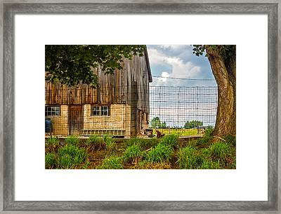 Rooster Turf Framed Print