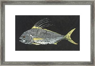Gyotaku Roosterfish Framed Print by Captain Warren Sellers