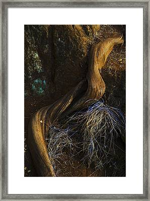 Tree Root Framed Print by Yulia Kazansky