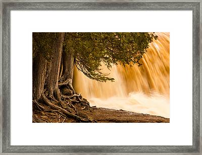 Rooted In Spring Framed Print