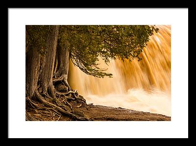 Rooted In Spring Mary Amerman Waterfall Cedar Tree Roots Tree Roots Framed Prints