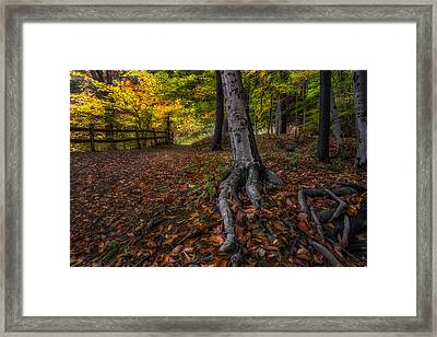 Rooted Framed Print by Mark Papke