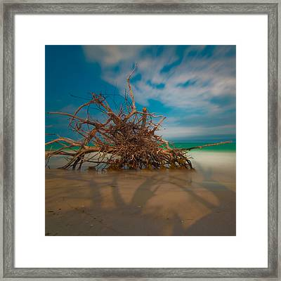 Roots 3 Framed Print