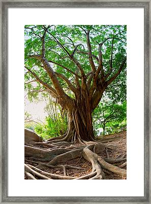 Roots Framed Print by Alexey Stiop