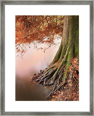 Roots Framed Print by Alfio Finocchiaro