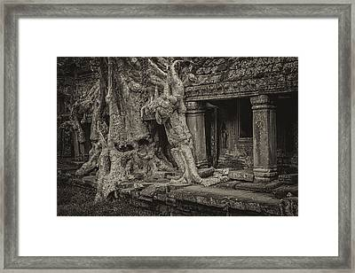 Roots In Ruins 7, Ta Prohm, 2014 Framed Print by Hitendra SINKAR
