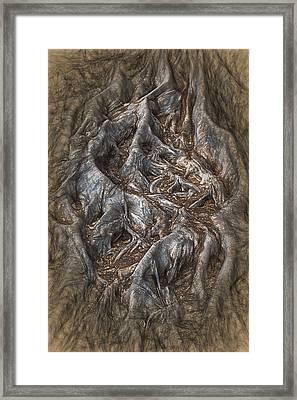 Roots Framed Print by John Haldane