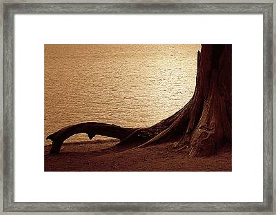Roots Framed Print by Mim White