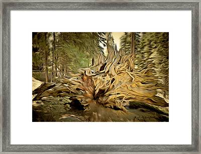 Roots Of A Fallen Giant Sequoia Framed Print