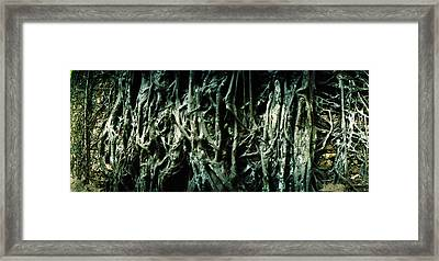 Roots Of An Old Growth Tree, Morro De Framed Print by Panoramic Images