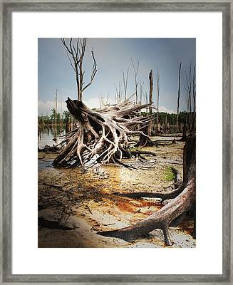 Roots Of Beauty Framed Print