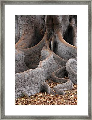 Roots Of The Fig Framed Print