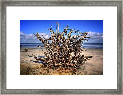 Roots On Jekyll Island Framed Print