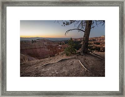 Roots On The Rim 1 Framed Print