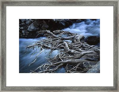 Roots Over Ozark Stream Framed Print by Garry McMichael