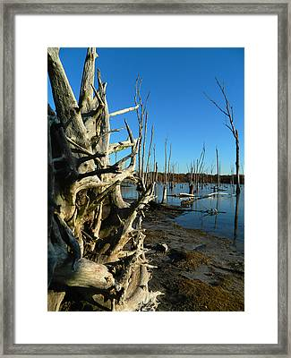Roots Preserve Framed Print by  Tina McGinley