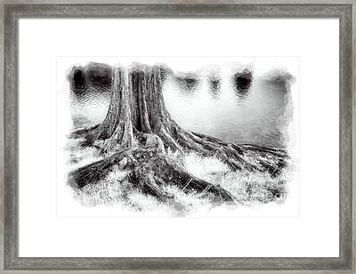 Roots Run Deep - Greensboro Nc II Framed Print by Dan Carmichael